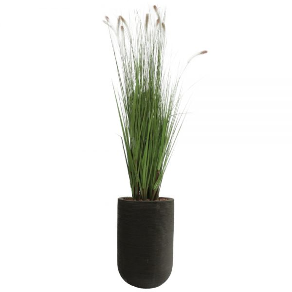 fs urban black dogtail grass