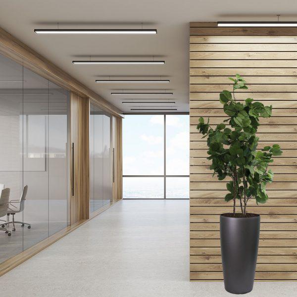 LFS Bauhinia 75 Graphite_Office