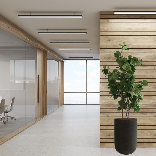 LFS Bauhinia Cody 70_Office