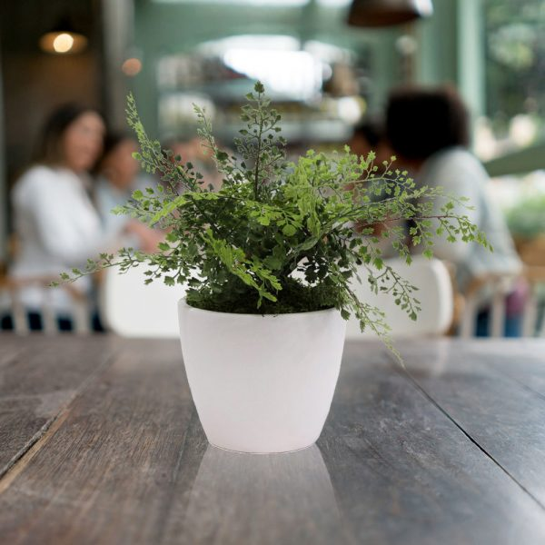 LTT Adianthum Fern 16 White_Cafe