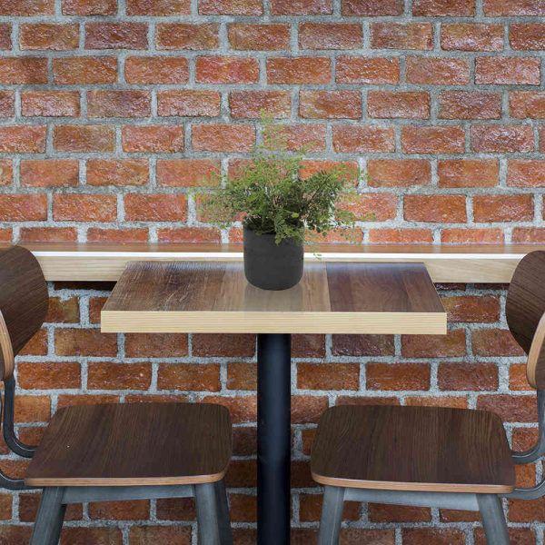 LTT Adianthum Fern Charlie 12 Black_Cafe