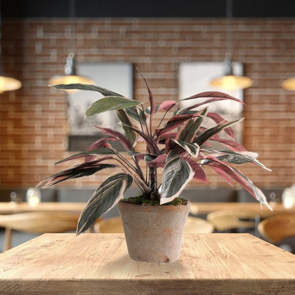 LTT Pink Caladium_Cafe