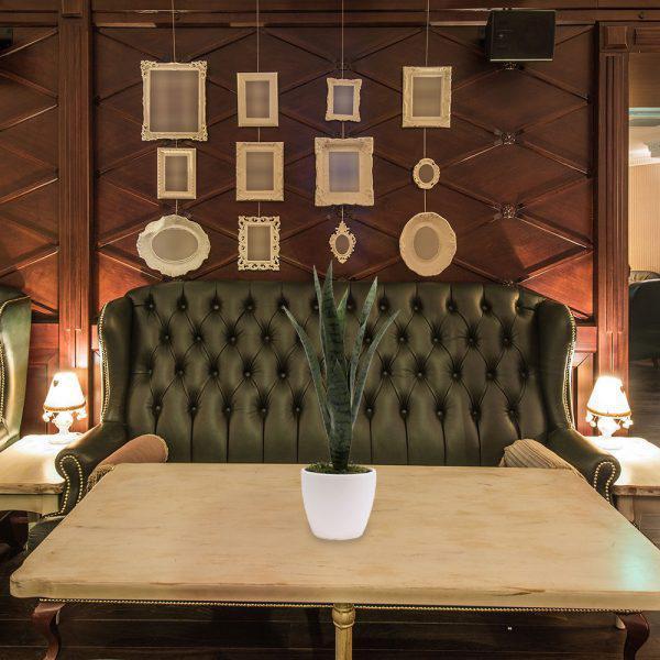 LTT Sanseveria Green 16 White_Lobby