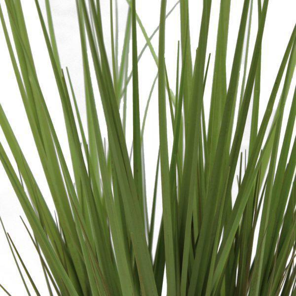 tt dogtail grass close