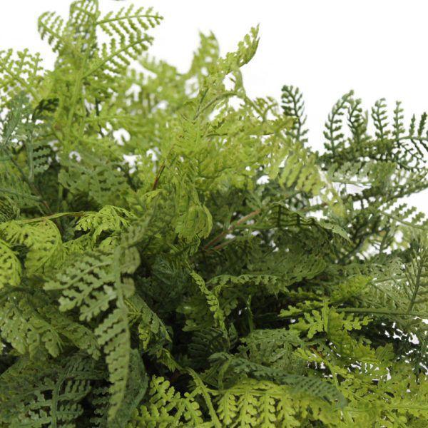 tt forest fern close