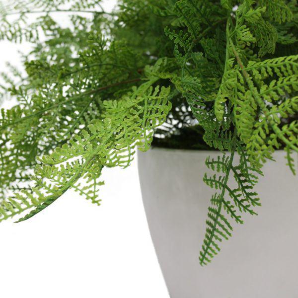 tt forest fern streamline white close